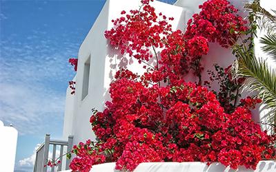 Mykonos Casa con Flores 400x250